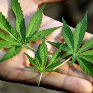 Marijuana Possession Attorney in Michigan